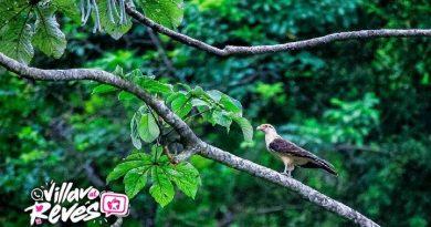 En Villavicencio avanza el proyecto ecoturístico Parque de las Aves