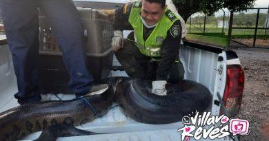 Una anaconda fue rescatada en la vereda Apiay de Villavicencio